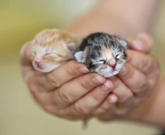 Котята на ладони
