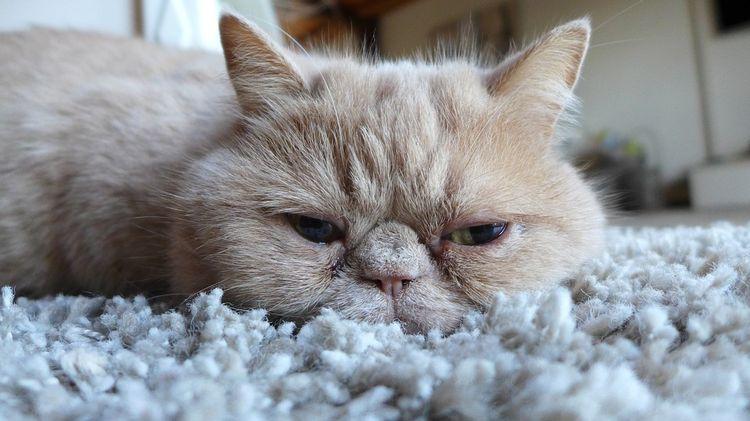 Перс на коврике