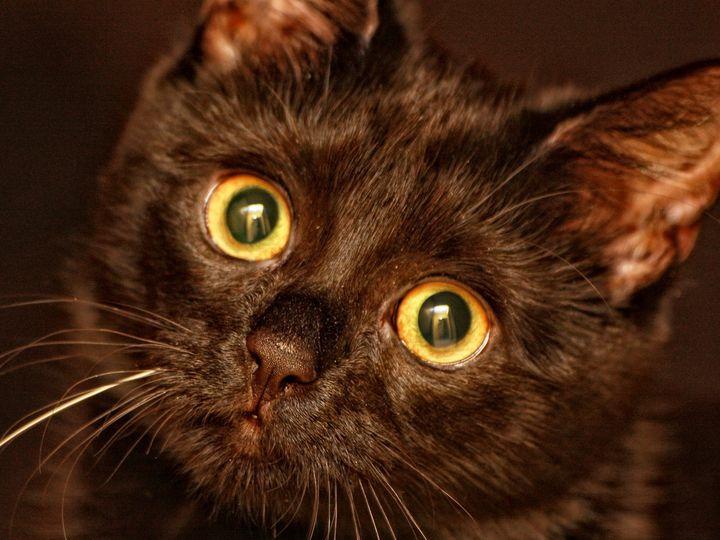 Черная кошка с большими глазами