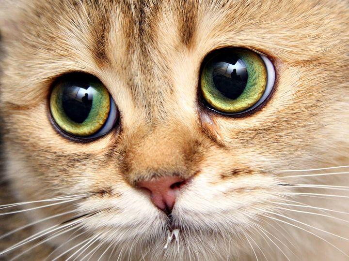 Рыжий кот с большими глазами