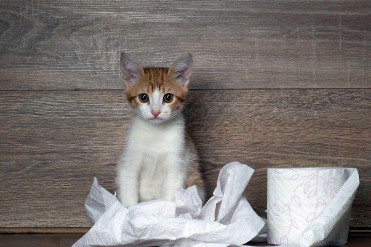 Кот и рулон туалетной бумаги