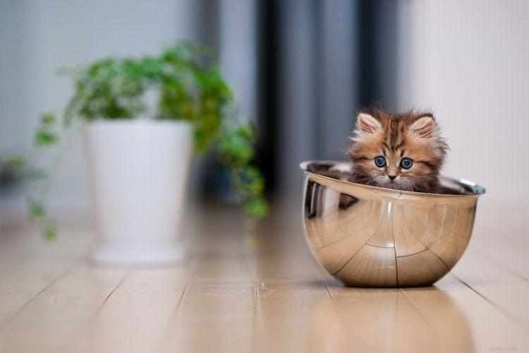 Котенок в миске