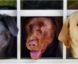 причины питомникового кашля у собак