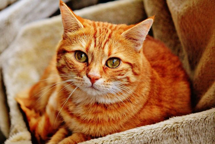 Рыжий кот в коробке