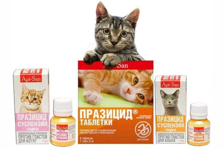 Препараты Празицид для кошек