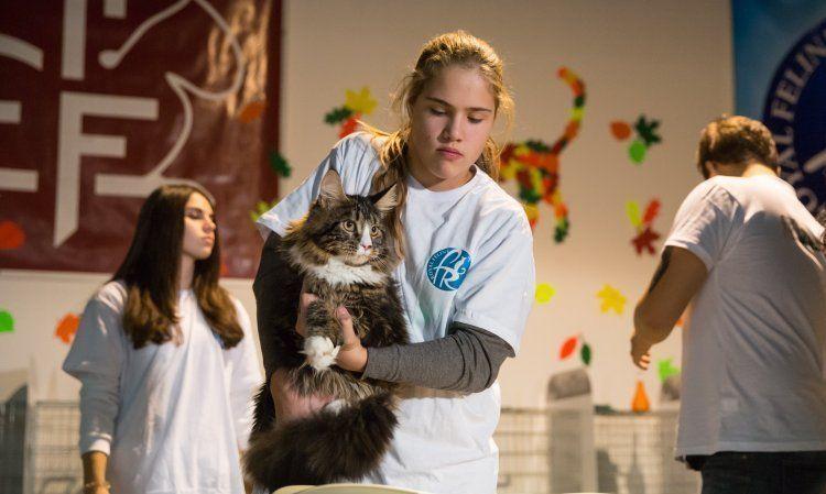 Мейн-кун на выставке котов