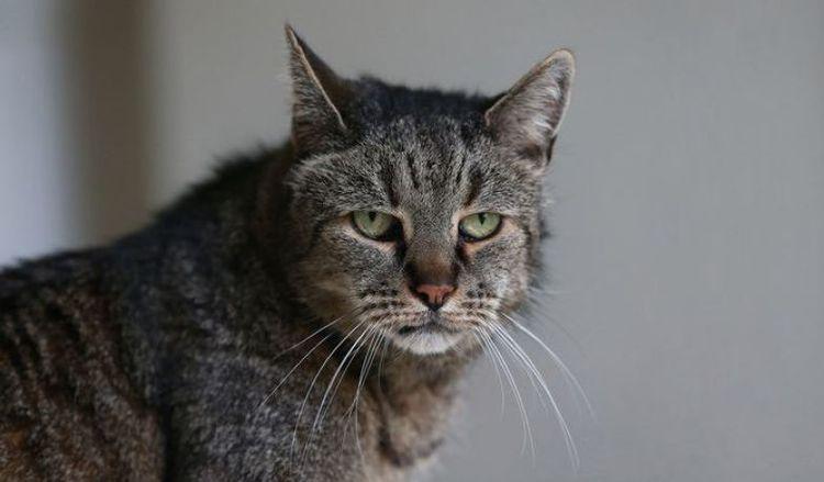 Натмег - самый старый кот