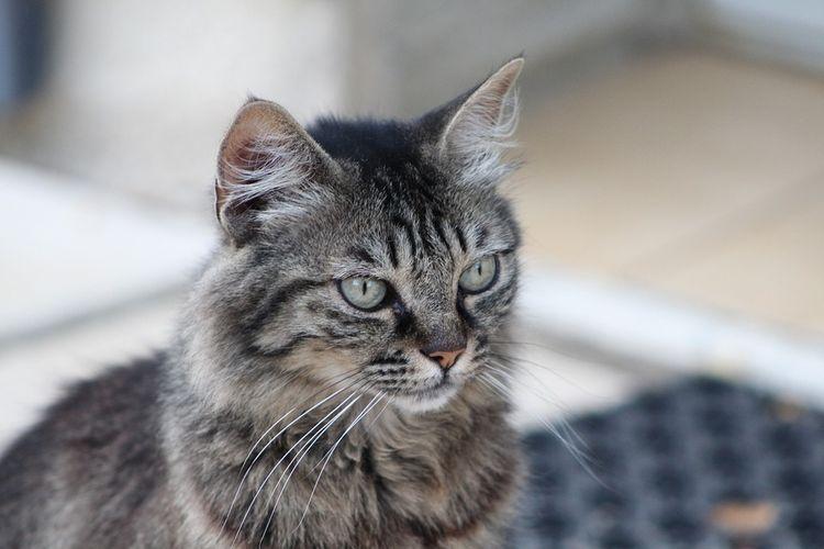 Самая старая кошка Люси