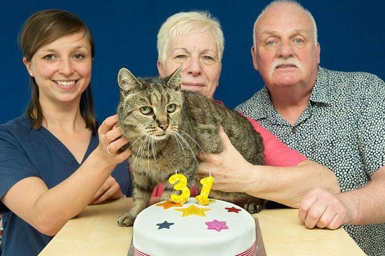 Кот которому 31 год