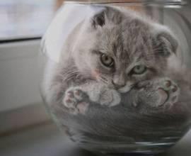 Смешной кот в стеклянной тарелке