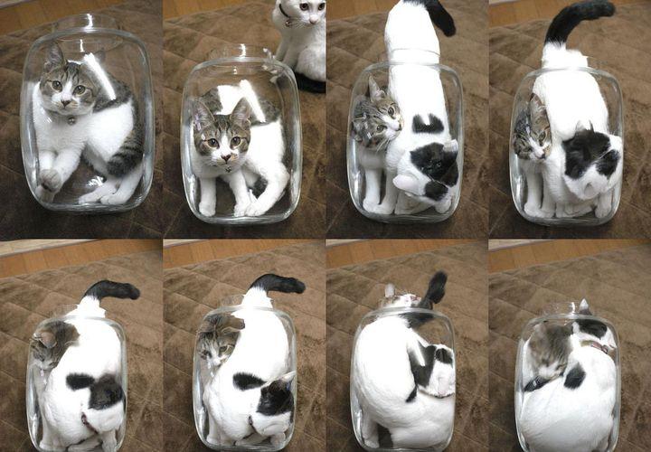 Коты в банке