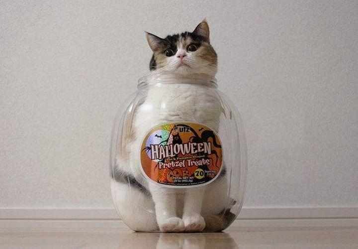 Кот в бутылке