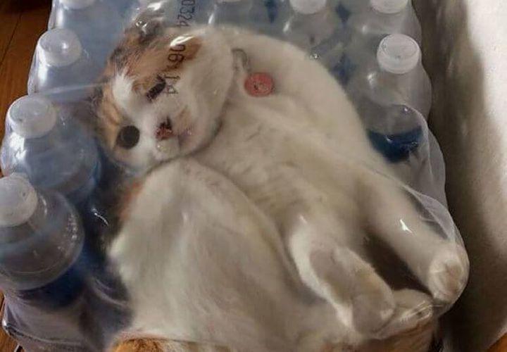 Кот застрял