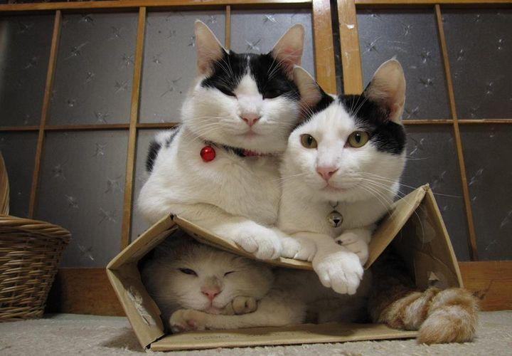 Коты сидят на коробке