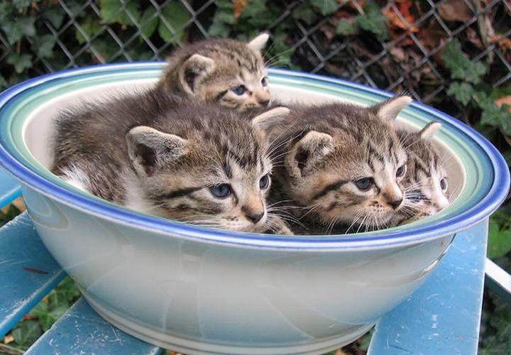 Котята в тарелке