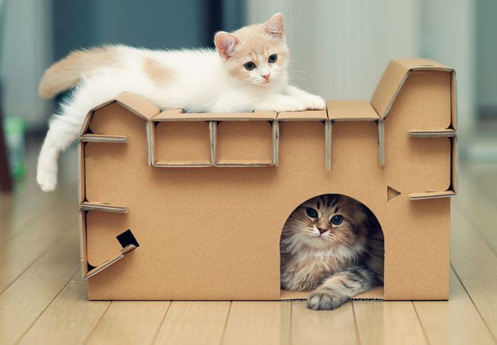 Домик из коробок для котов