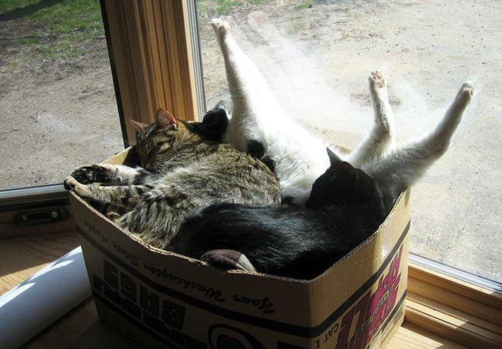 Коробка с котами