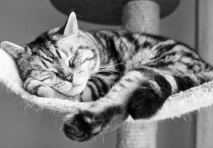 Кот спит на когтеточке