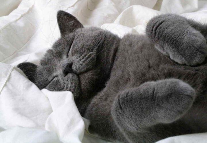 Британец спит