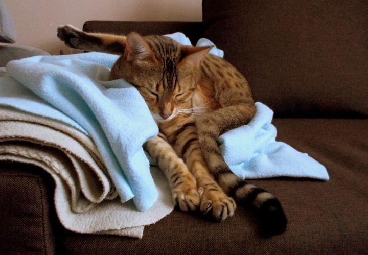 Кошка спит в смешной позе