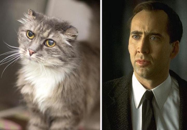 Коты похожие на знаменитостей