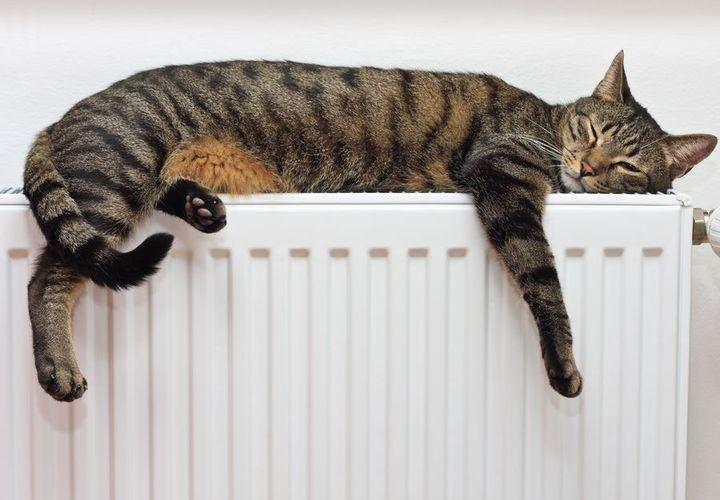 Серый кот на батарее