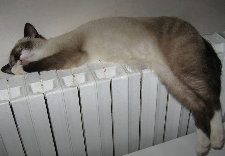 Кошка спит на батарее