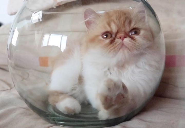Кот в стеклянном аквариуме