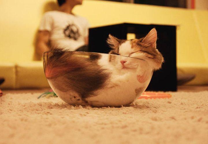 Кот в стеклянном салатнике
