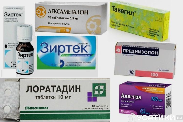 Лекарства от аллергии на собак