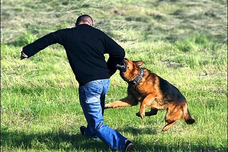 Отработка нападения овчаркой