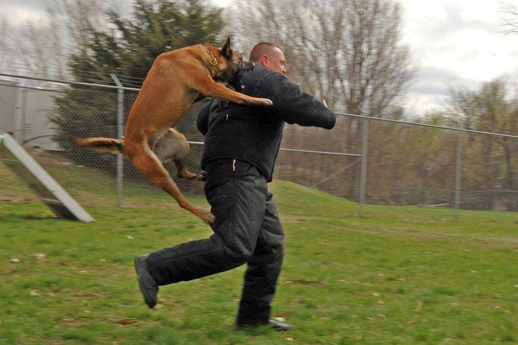 Собака нападает со спины