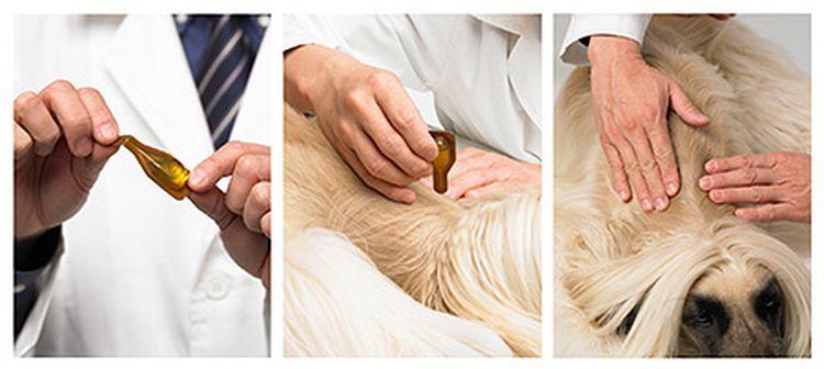 Как применять Эссеншиал 6 для собак