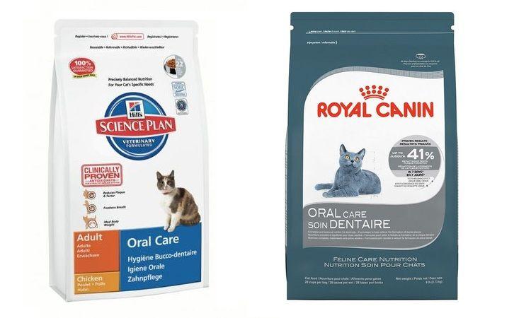 Корм для профилактики болезней зубов у котов