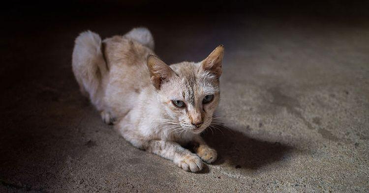 Анорексия у кота
