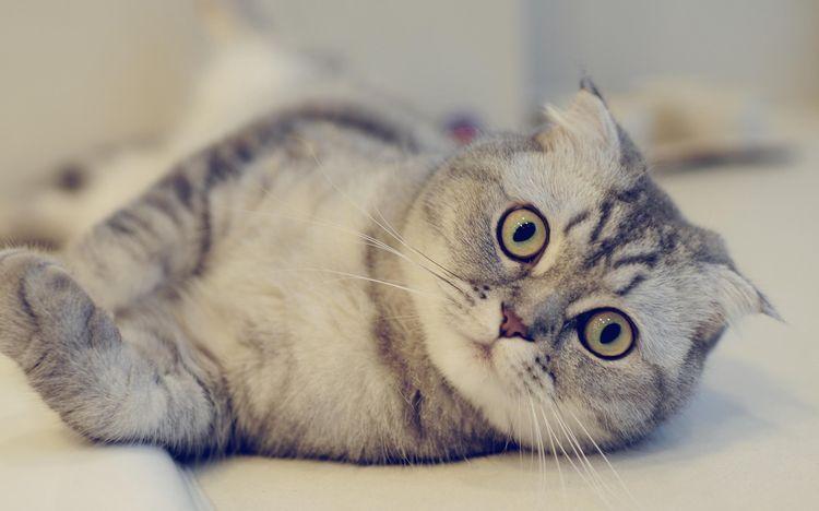 Кот с чуствительным пищеварением