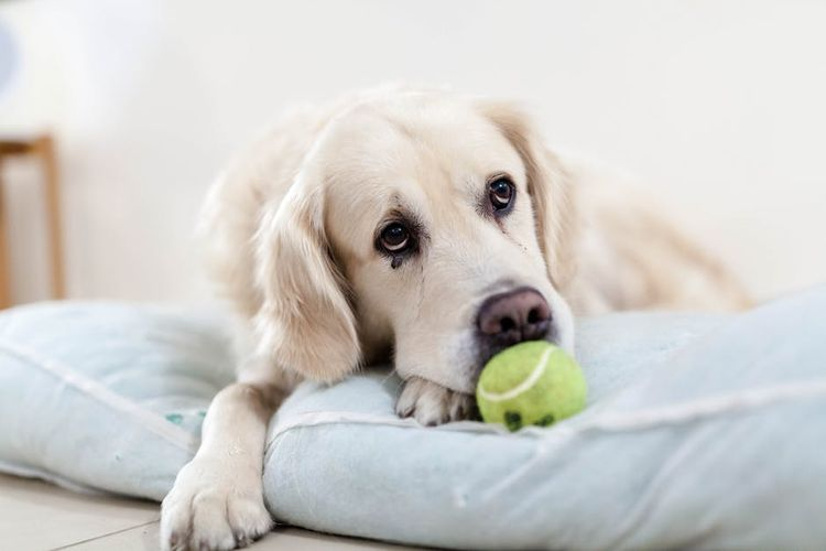Собака не хочет играть