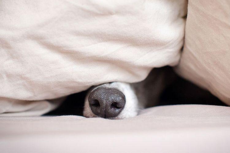 Пес спрятался