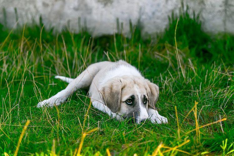 Собака прячется в траве