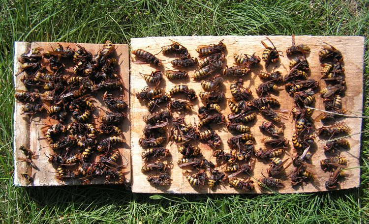 Ловушка для пчел и ос