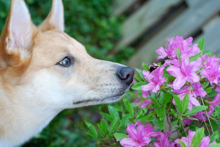 Собаку укусила пчела: что делать
