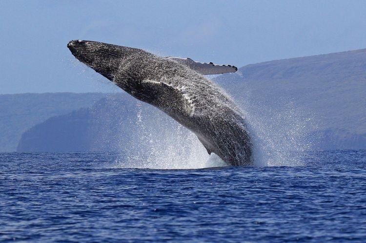 Кое е най-голямото животно в света