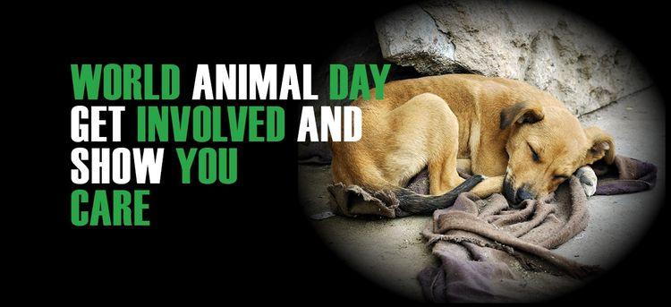 Международный день защиты животных