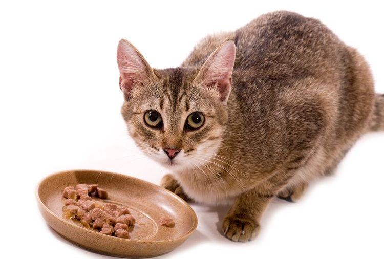 Кошка у миски