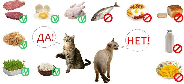 Что можно и нельзя кошкам