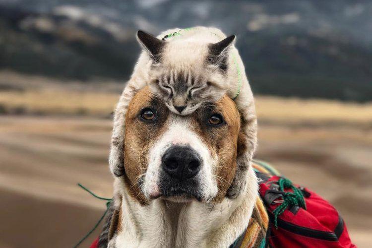 Кошка на собаке