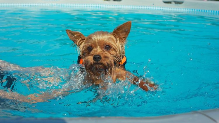 Щенок плавает