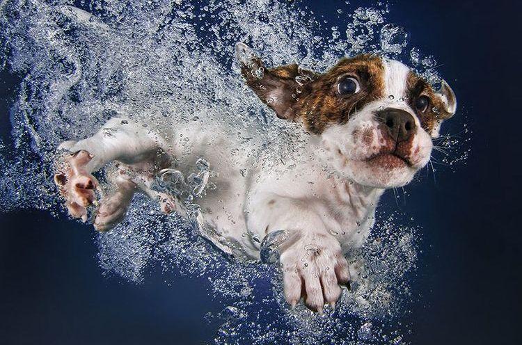 Щенок плавает в бассейне