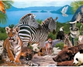 Много животных на одной картинке