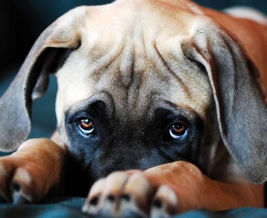 Собака болеет